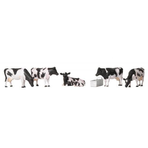 36-081 Cows