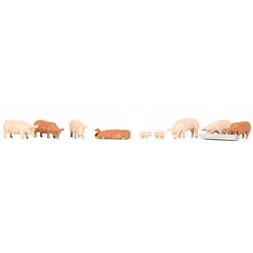 36-082 Pigs