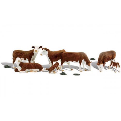 A1843 Hereford Cows